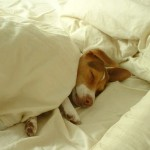 Как улучшить сон
